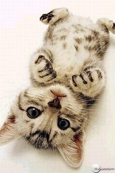 imagens Fofinhas gato