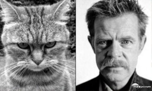 celebrity-cats-10