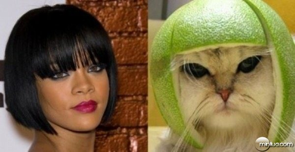 celebrity-cats-12