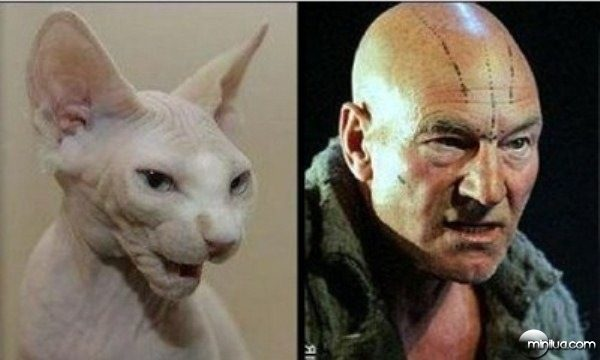 celebrity-cats-13