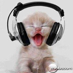 bichano-ouvindo-musica