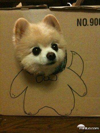 cachorrinho-na-caixa_large