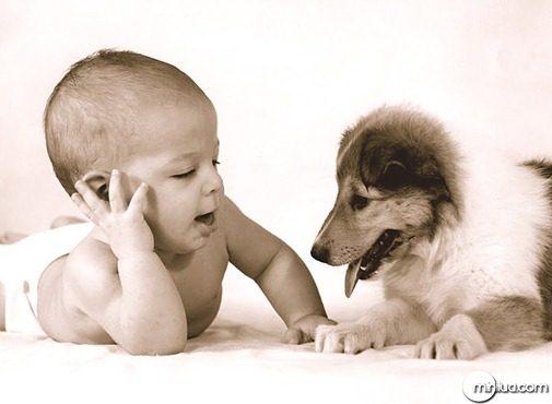 cachorro_e_bebe