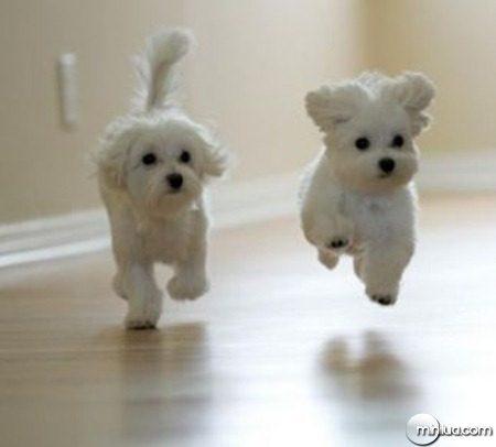cachorros-cuidados-especiais-Not1