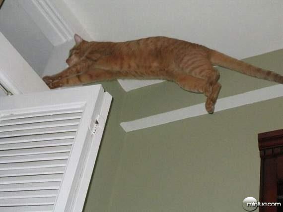 cats04