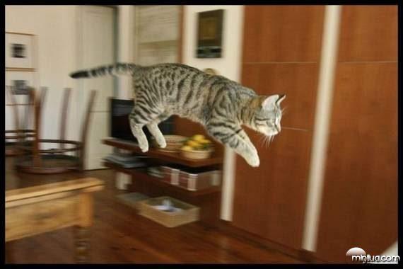 cats11
