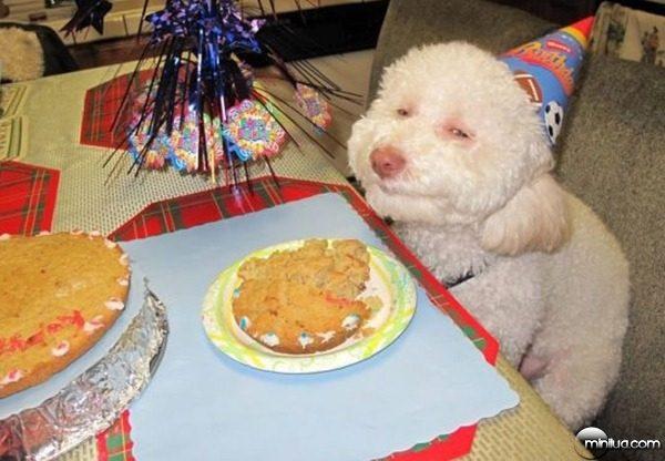 cachorro-aniversario