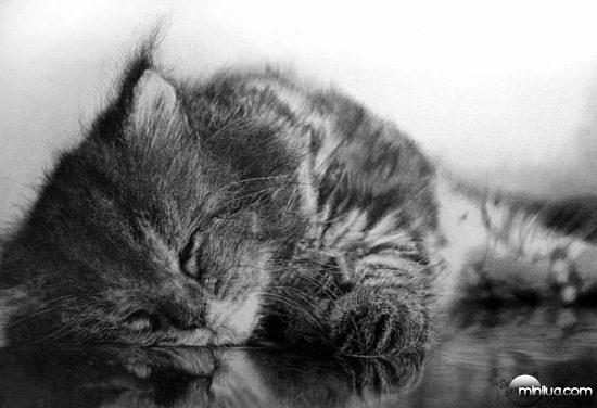 cat-drawings-05