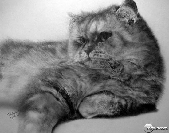 cat-drawings-09