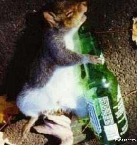drunkanimals11