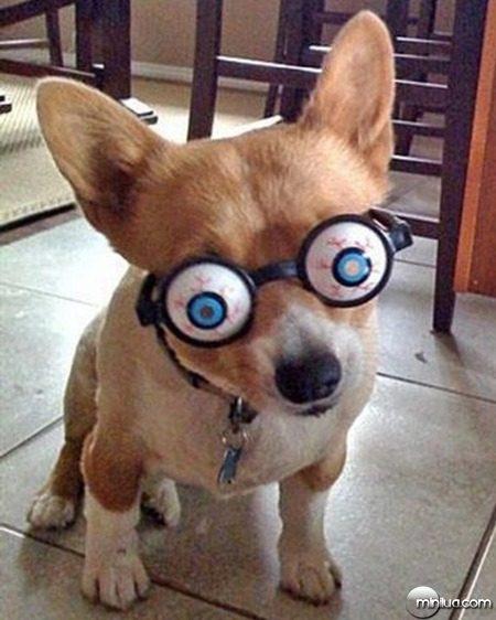 fantasias-de-hallowen-para-caes-cachorros-nerd-geek-geekiados (7)