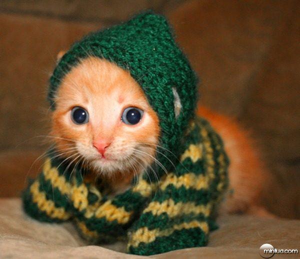 fotos-gato-roupa-trico