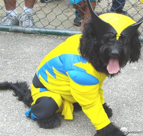 pet_cosplay_wolverine1