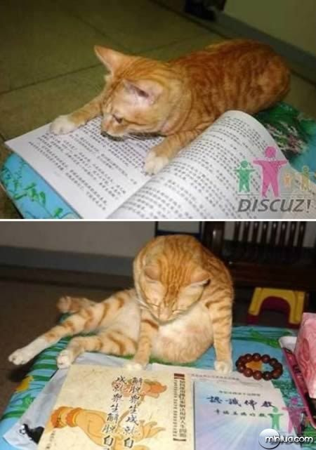 a98100_cat_5-studying-cat