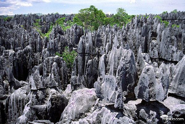 A-floresta-de-pedra-de-Madagascar-2