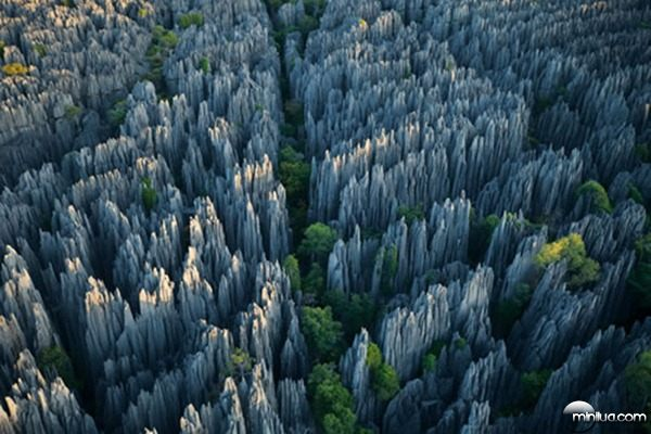 A-floresta-de-pedra-de-Madagascar