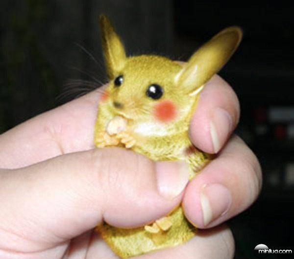 pikachu-de-verdade