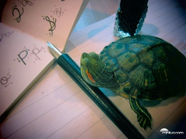 my-turtle-learns-penmanship-this-year-28732-1346360770-2[5]