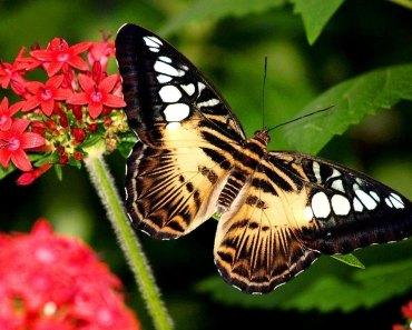 As mais lindas borboletas
