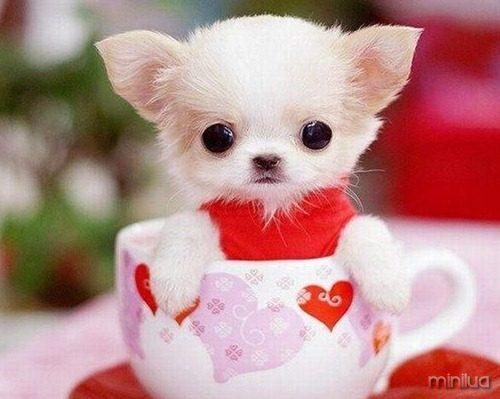 cute-dog6