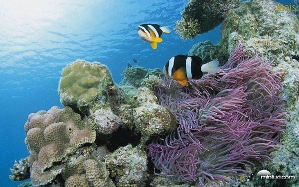 peixes-mar-fundo-wallpaper