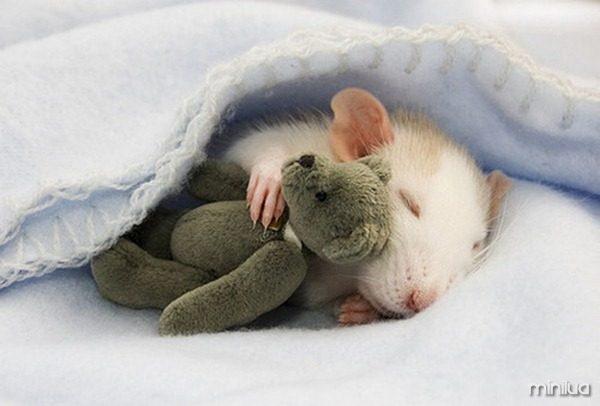 filhote-de-hamster-fofo