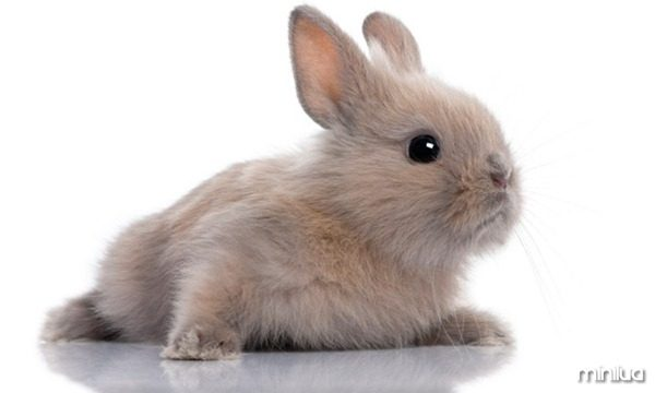 galeria-filhotes-fofos-coelho