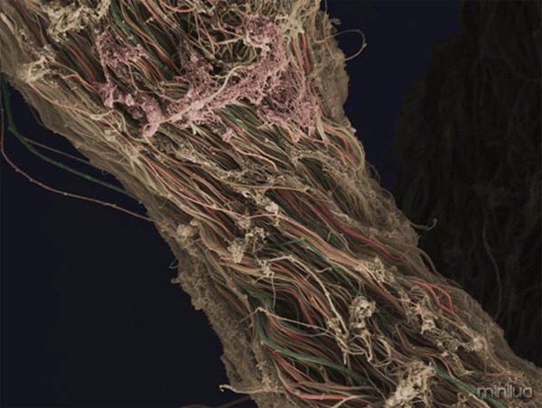 Fotos-mais-incríveis-ciência-2012-5