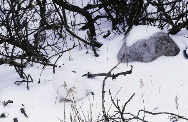 camuflagem_08