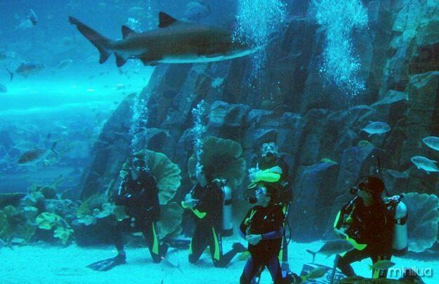use-this-aquarium