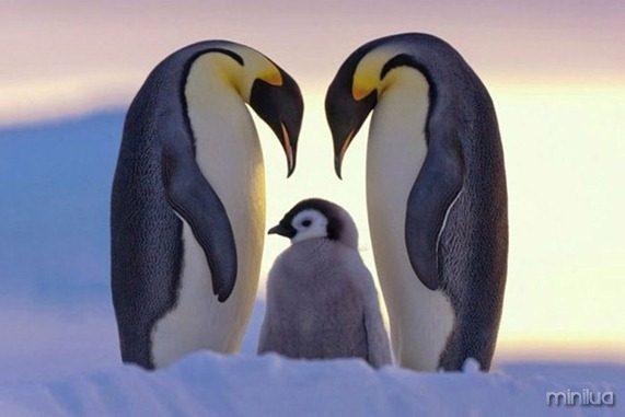 fotos da natgeo pinguim[5]