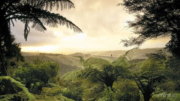 zz Fern forest, Jamaica