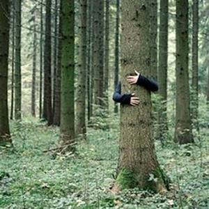256883-stock-photo-human-being-nature-hand-tree-forest-autumn