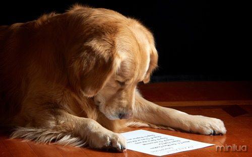 smart-dog-309888