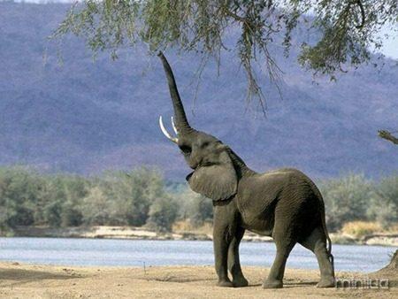 Llamada-De-Elefante
