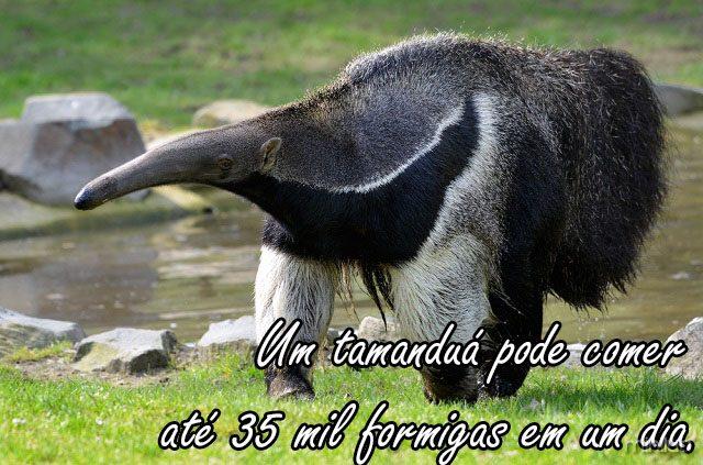 anteater_shutterstock_81890218