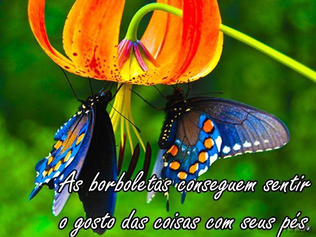 butterfly_8-jpg