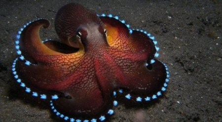 Custom-Made-Blue-Blood-Keeps-Octopuses-Alive-in-Sub-Zero-Temperatures