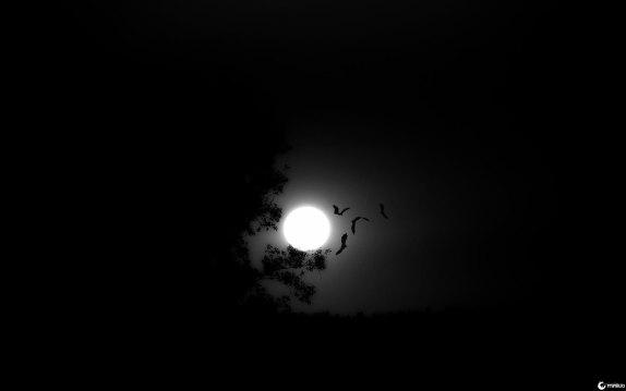 dark_night_by_layperson-d6bc6xw