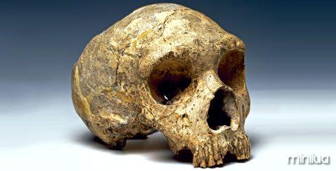 homo-neanderthalensis-skull_62489_1