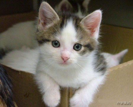 animais-gato-539fc9