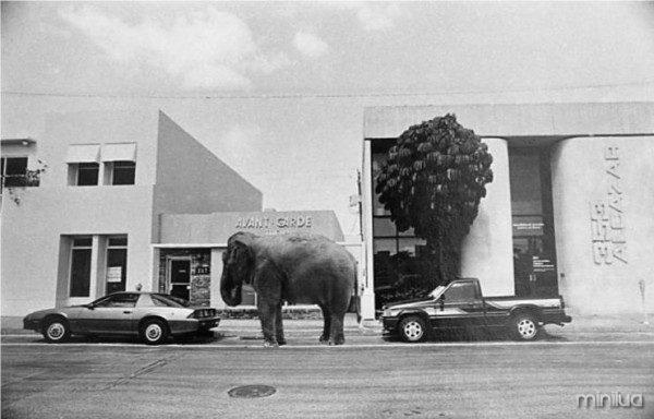 elephant-parking