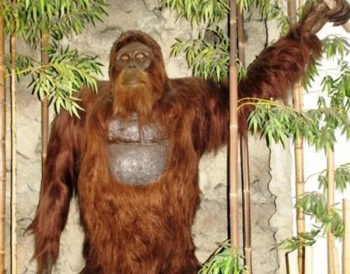 www.smithsonianmag.com-how-gigantopithecus-became-extinct-768-1024.jpg__800x600_q85_crop_subject_location-292387-610x477