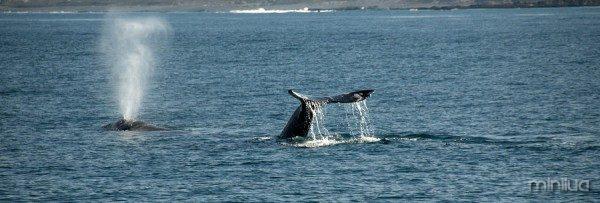 whale-spout