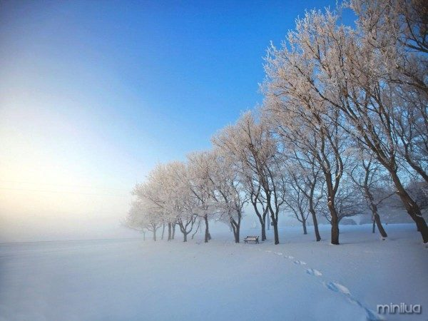 02f-just-how-cold-is-it-28-02-11-alberta-ca1
