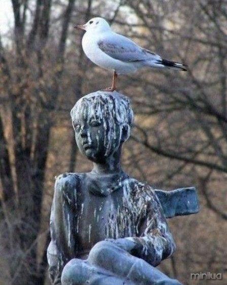bird_poop_statue