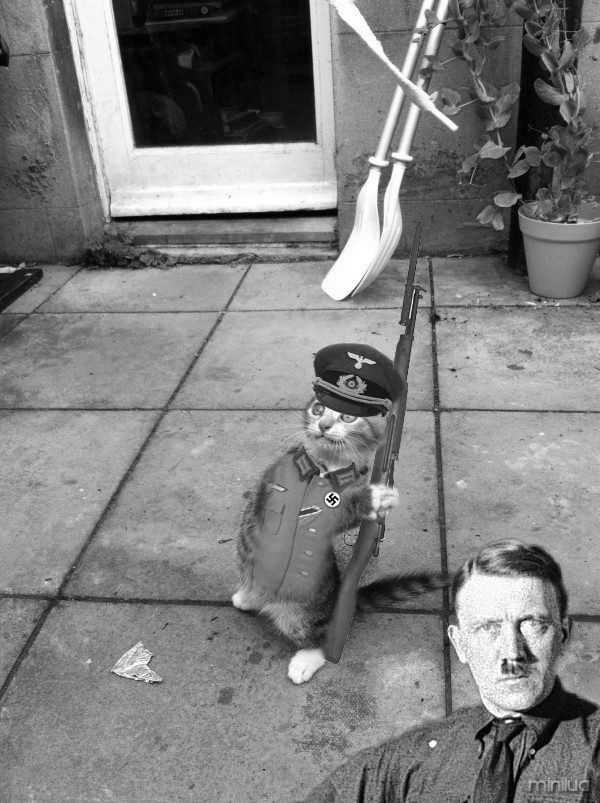 InfinityAngel - Gato Nazista