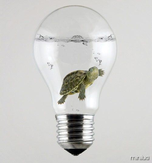 Turtle inside the Light Bulb
