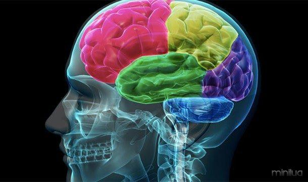Música aciona actividade na mesma parte do cérebro que libera o