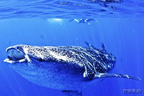 Whalesharks-Tour-1200px-4